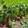Ontario fruits and vegetables guide, whats in season?